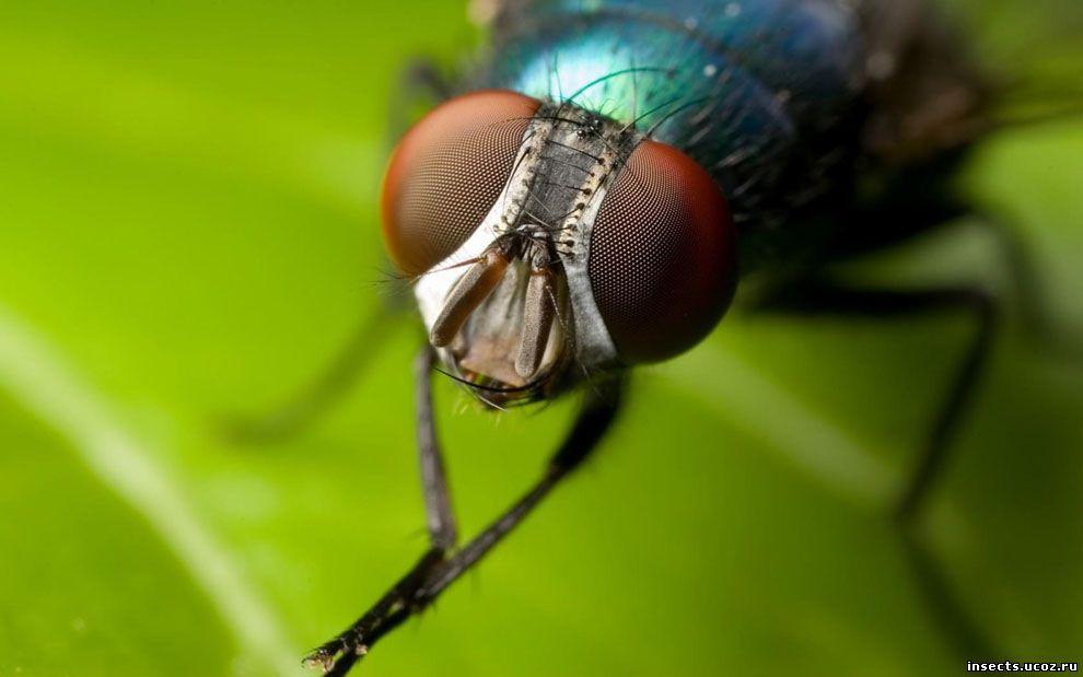 У многих людей насекомые гораздо чаще