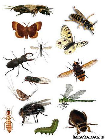 Что будет если исчезнут насекомые