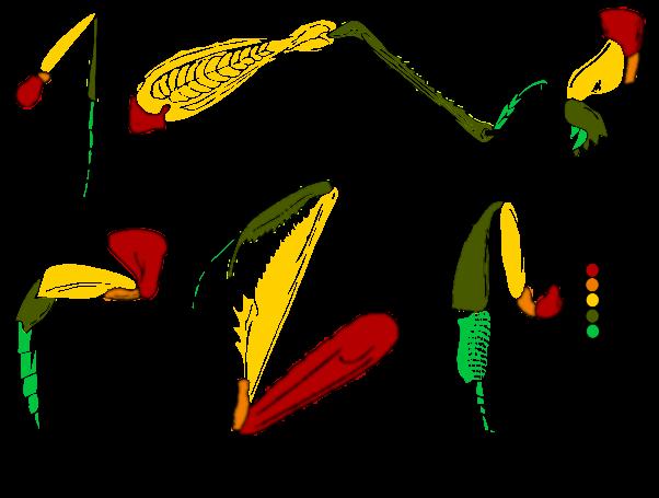 типы конечностей насекомых картинки
