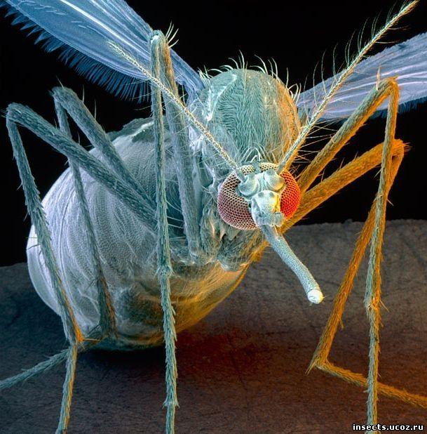Каких насекомых можно встретить в