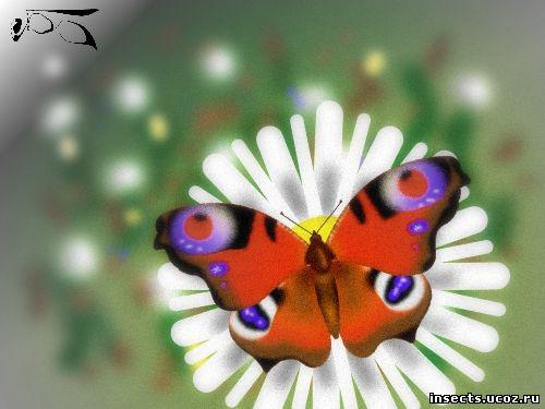 Булавоусые бабочки