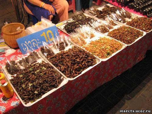насекомые на прилавках Таиланда