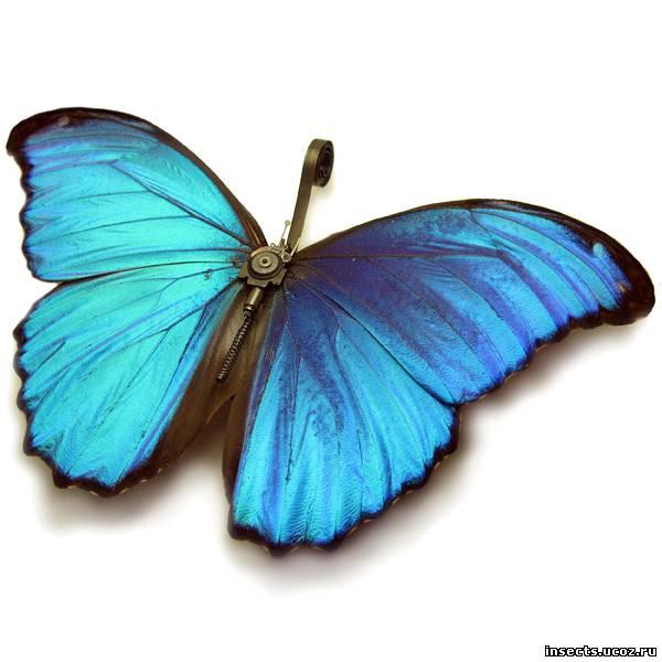 Бабочка в стиле стимпанк 3